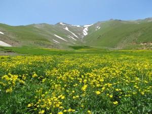 منطقه-حفاظت-شده-انگوران،-استان-زنجان7